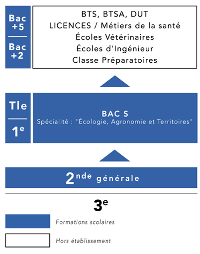 Organigramme Sciences